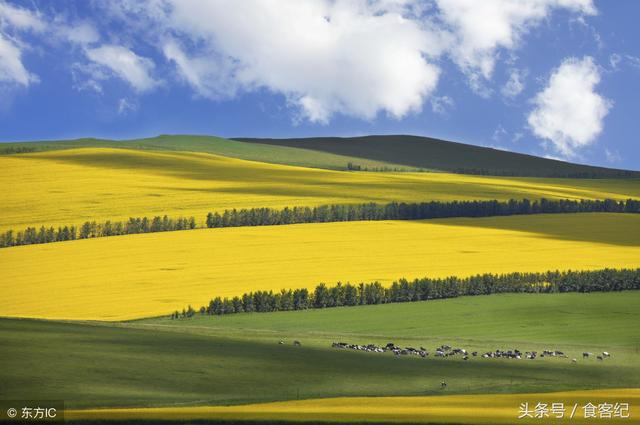 这个季节来到内蒙古呼伦贝尔,谁能告诉我有什么美食