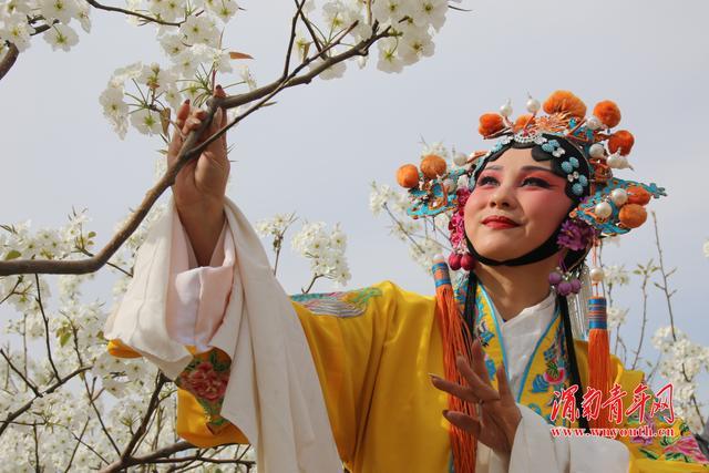 蒲城第三届梨花文化旅游节今开启!秦腔戏搬到梨园里