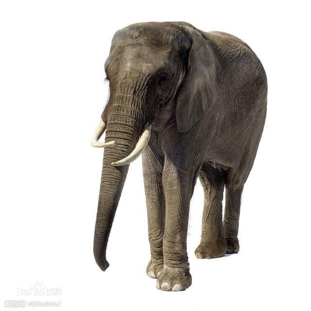 冒险岛-10年,百度在互联网给大象安了一个家
