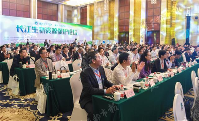 江豚、中华鲟保护现状如何?水生野生动物保护论坛给出这样的答案