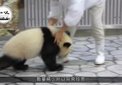 比大熊猫还要珍贵的动物,已经存活了6万多年,全球仅剩38条!