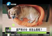 云南文山出台养狗新规:7点至22点禁遛狗,你怎么看?