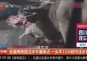 安徽两地现注水牛屠宰点,一头牛12小时内注水120斤