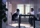 """狗狗竟因为""""感情""""问题不肯吃饭,看主人怎么说!"""