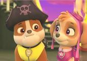 灰灰打开藏宝箱,里面财宝很多,海盗船长也是狗狗