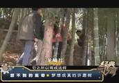 经典传奇:想不到的离奇——这棵树长满耳朵 还能让你梦想成真!