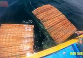 捕捞船上粘网挂小鱼用来做鱼饵,大海鱼串钩钓不停,鱼饵钱都省了