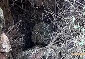 800斤黄牛吃草时不慎滑入洞底,洞口狭小,救援难度大!最终……