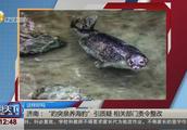 济南:趵突泉里养海豹引发质疑,相关部门被责令整改