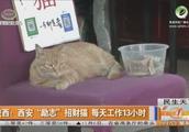 """西安""""励志""""招财猫,每天都在店门口工作13小时"""