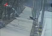 家门口出现偷狗贼,男子驾车去追却出意外,对方被撞当场身亡!