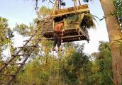 荒野小哥把庇护所挂在树上,摆脱动物干扰,终于可以睡安稳觉了