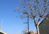 听说隔壁的西安蓝天白云,郑州也不甘落后,一起欣赏下郑州的蓝天
