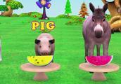 一排动物,一排西瓜,每人一块哦,不准吃其他人的~小猪不够吃