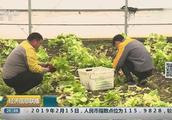 上海阴雨不断农田受损 蔬果产量或减半
