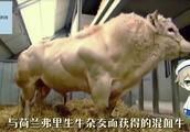 """动物界的""""史泰龙"""",出生就有100斤,肉质鲜美吃货的最爱!"""