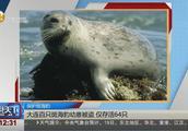 大连:百只斑海豹幼崽被盗,被追回时仅存活64只