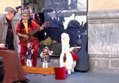 牛人街头卖艺带着木偶和羊驼,就是要成为这条街最亮的风景线