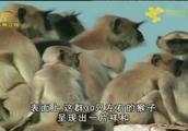 在这里猴子的恶劣行为随处可见,但这里的人毫不介意