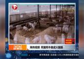 网传视频,死猪死牛做成火腿肠