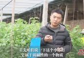 三农技术:6毛钱,每亩蔬菜增产一小半,农民:这投资,值!