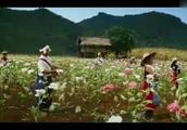 门徒林昆把阿力带到鸦片种植地,告诉他外国人的钱最好赚!