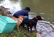 2年前花300元买的狗,现在狗狗会游泳抓鱼,真是捡了个大便宜