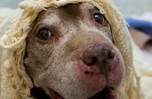 暖哭!18岁老狗沦落收容所,终于等到了可以安享晚年的新主人