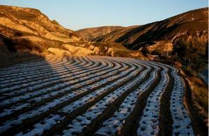 农村领域引人关注,沐金农深入研究新型三农人群组织行为
