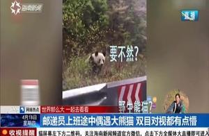 邮递员上班途中偶遇大熊猫,双目对视都有点懵