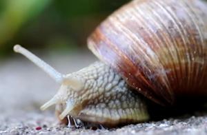 这种蜗牛壳的坚硬程度可比拟盔甲,而其防火防水防电,来看看!