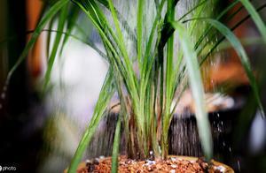 """从哪些方面能判断兰花植株的""""根系""""是否已经腐烂"""