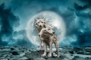 阿里巴巴如何培养狼性团队?用这个方法,小白兔也能成为狠角色