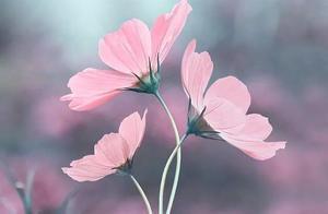 春雨的图片和名句 有关描写春天的名言名句