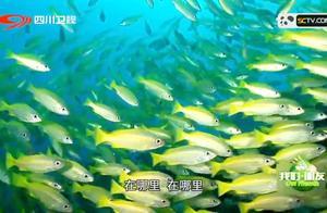 真人版的捕鱼达人,一大波鱼群来袭,赶快擦亮你的双眼不放走一个