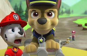 狗狗巡逻队 阿奇收到莱德队长的紧急任务 汪汪队立大功