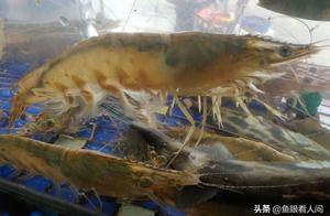 海鲜市场现两极分化 鲜活海鲜昂贵咋舌 便宜海鲜相差近20倍