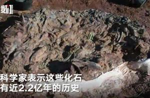 阿根廷发现2.2亿年前恐龙墓地,10只恐龙因饥渴而死