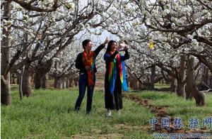 张掖万亩梨花盛开白如雪