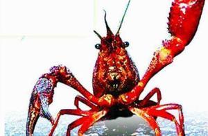 总投资6000万,年产值2.44亿!华容这条食品生产线专为小龙虾而生