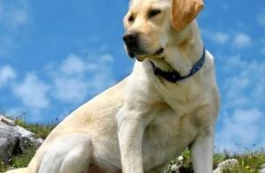 最忠诚的五种狗,德国牧羊犬在名单上,第五种城市在城市非常罕见
