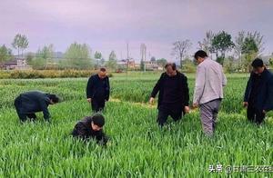 甘肃小麦病虫害统防统治工作全面推进
