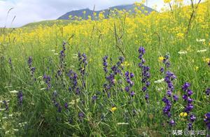 描写春天景观的句子 描写春天公园景色的句子