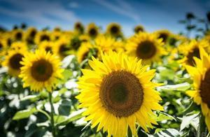 早安心语:人活着不是靠泪水博得同情,而是靠汗水赢得掌声