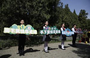 北京市区最大二月蓝花海盛放 天坛公园生态保护显示成效