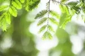 徐志摩最美的15首诗与歌:一生至少要读一次