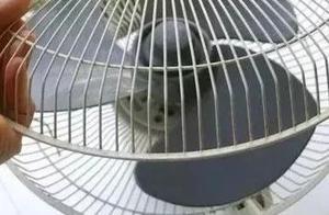 风扇脏了难清理?教你一招,不用拆电风扇,立马洁净无尘!