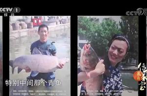 """桑基鱼塘出产的都是宝!养育的青鱼价格不菲,被称作""""乌金子"""""""