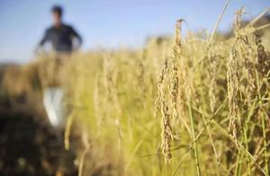 假农药致5400亩麦田绝收,卷宗110册堆起小山,检察官这样办案