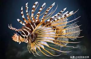 您家养的海水鱼,究竟能活多少年?您知道吗?